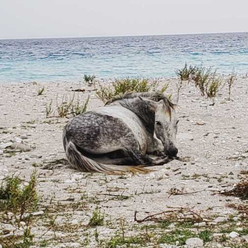 A wild horse chilling on Borsh Beach.