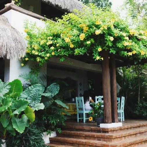 Pangloa and Bohol Island La Casita de Baclayon flowers