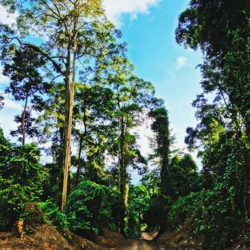 Road leading to Borneo Rainforest Lodge