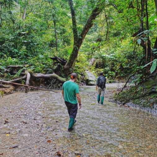 exploring borneo island walking through a stream