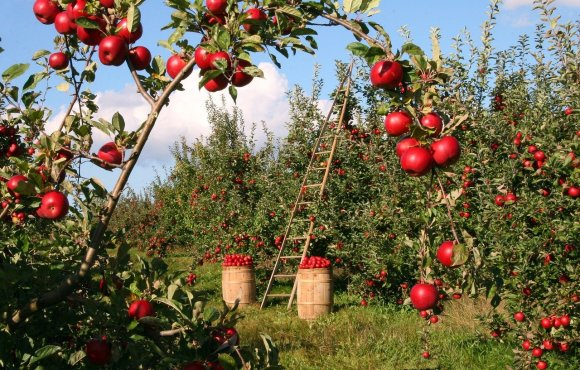 Planting Multiple Fruit Trees Close Together for the Perfect Backyard Orchard