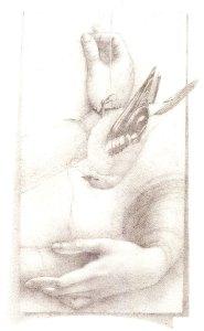 Goldfinch (After da Vinci), pencil by Susan Drucker