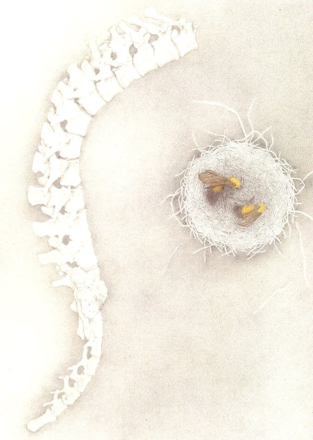 Bees Nest, pencil and watercolor by Susan Drucker