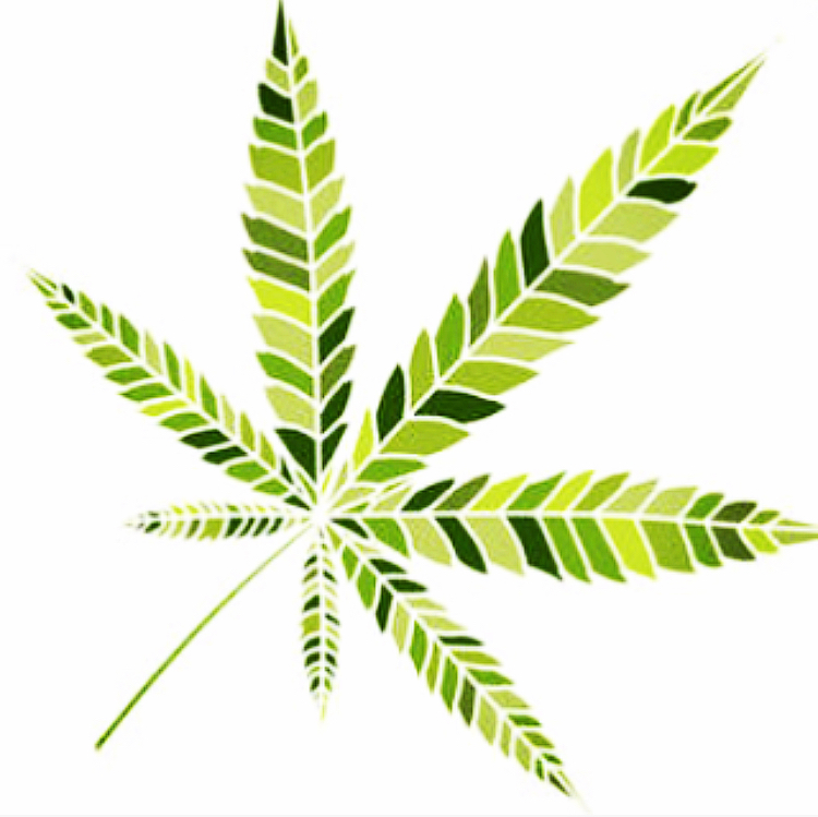 Cannabis- Where Did That Name Come From?