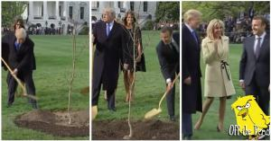 Trump and Macron murdering a young tree