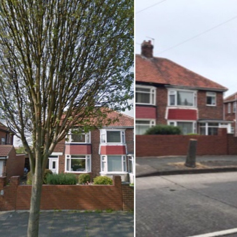 SSTAG trees before and after shot one