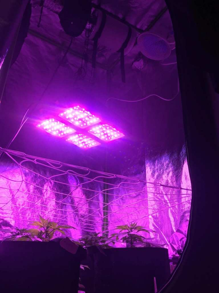 The best indoor grow tent setup for cannabis plants.