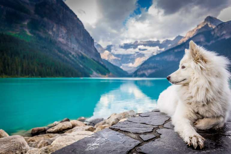 White dog sitting beside a mountain and lake.