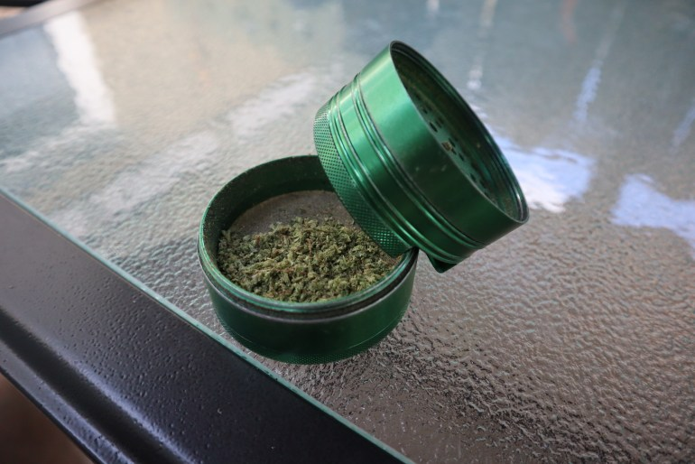 A green grinder that is opened is filled with ground up cannabis bud. The grinder sits on a glass table.
