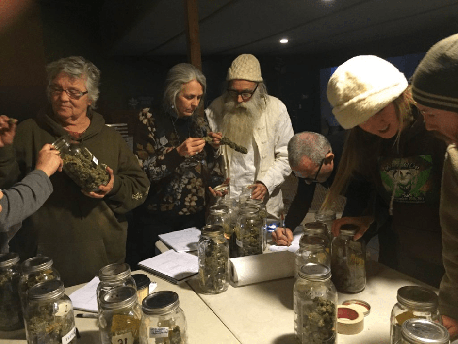 Emerald Cup cannabis contest top judges Nikki Lastreto and Swami Chaitanya review candidate specimens. Samples came from eight California counties. (Bulldog Media)