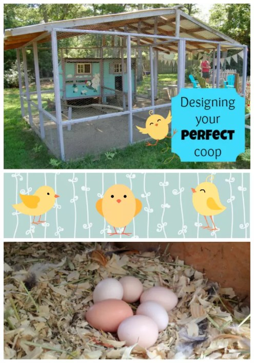Get our tops tips for designing your perfect chicken coop!