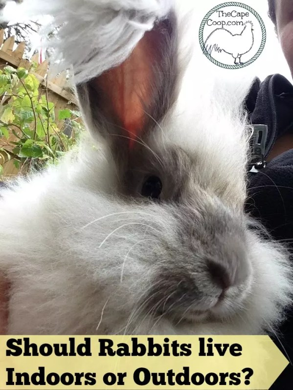 Should rabbits live indoors or outdoors?