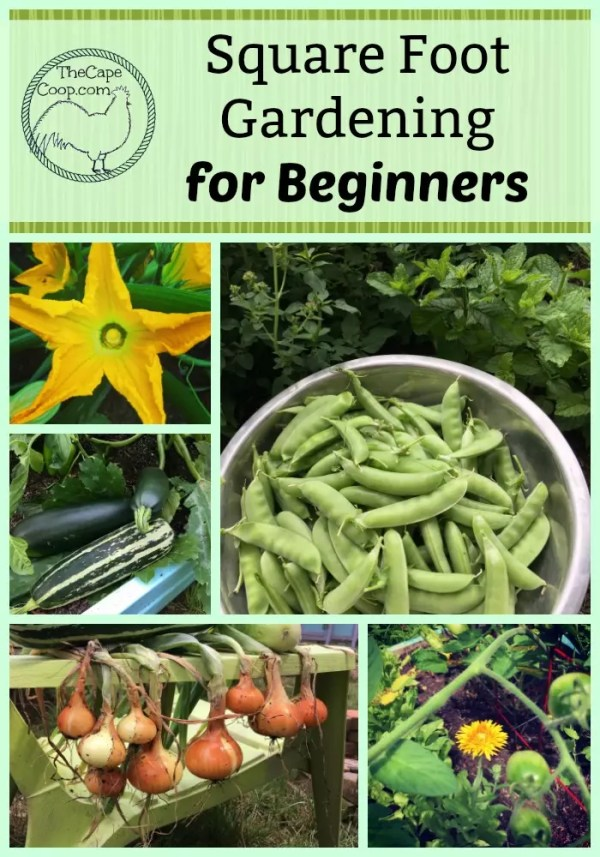 Beginners Guide to Square Foot Gardening - The Cape Coop