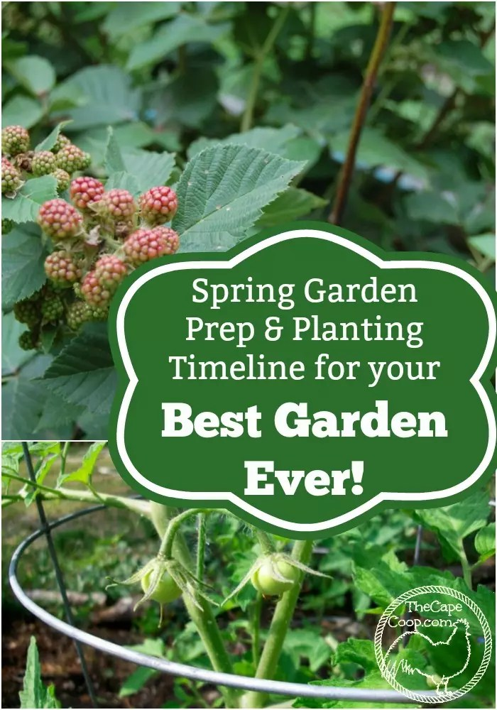 Spring Garden Prep Planting Timeline For Your Best Garden