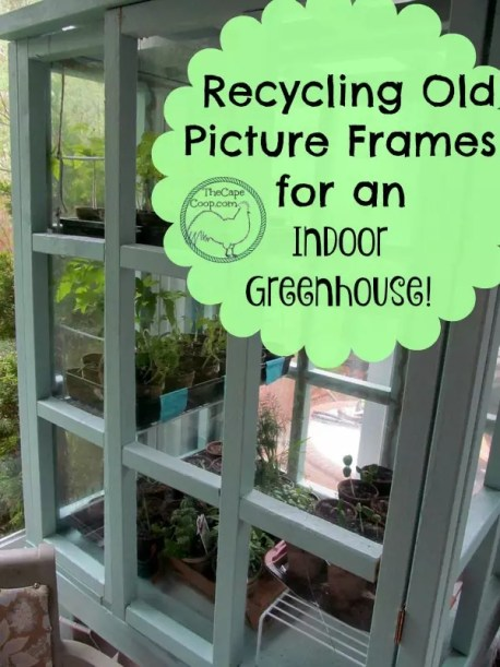 Recycle Old Picture Frames For An Indoor Greenhouse