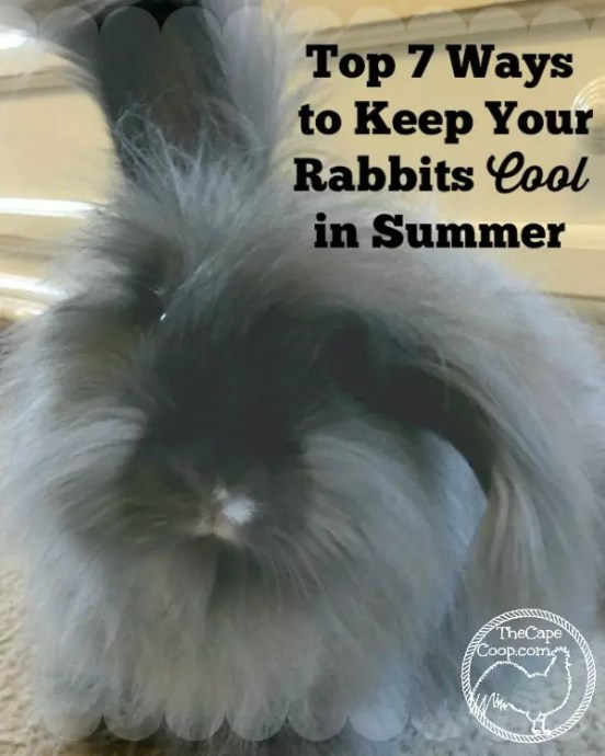 f84f5d9306 With the summer in full swing and the temperatures on the rise there are a  couple things you can do to help your rabbits beat the heat.