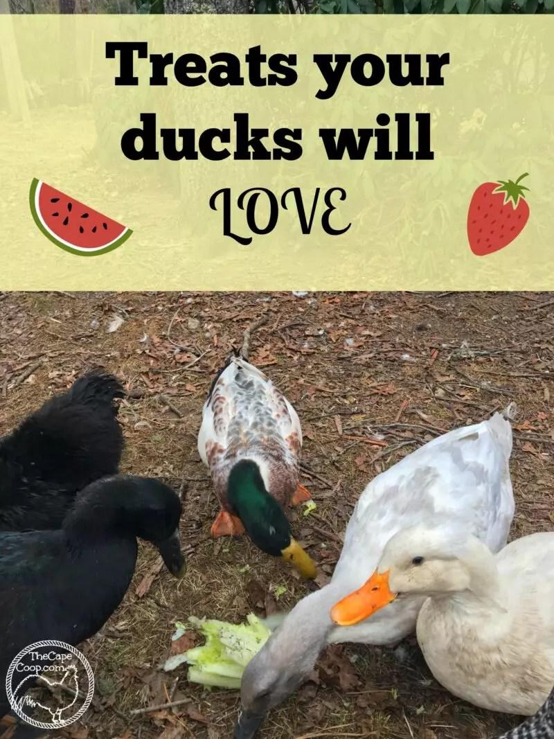 how to make ducks my friend