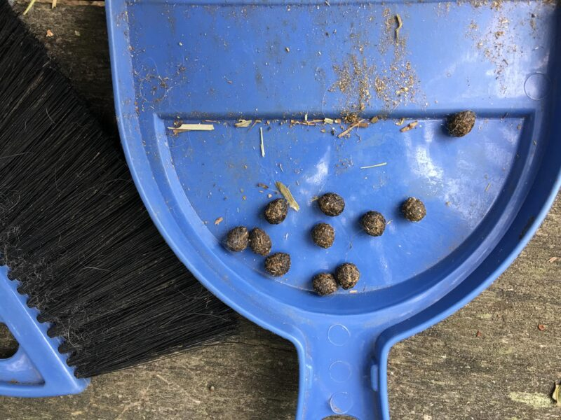 The Scoop on Rabbit Poop - The Cape Coop