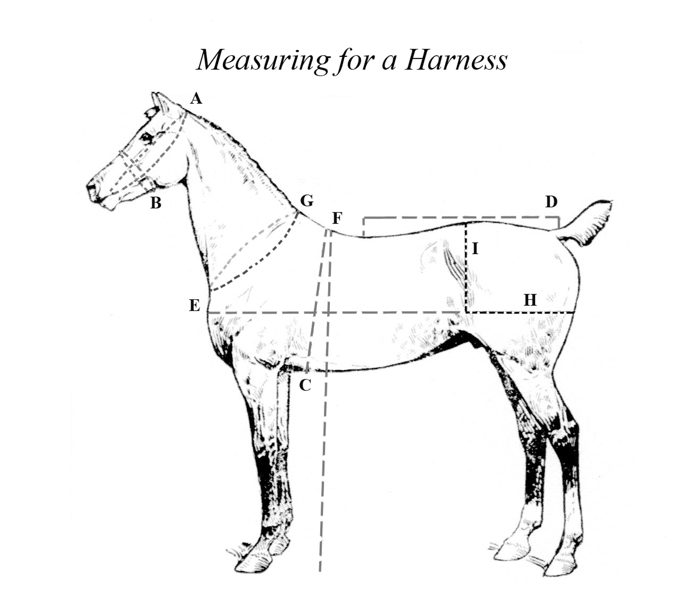The Carriage House Harness Measurement Form
