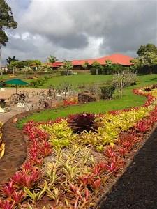 dole-garden