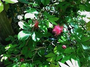 denver-botanic-garden-5