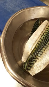 Brined Mackerel