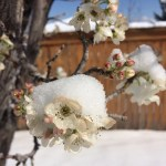 Wordless Wednesday: Spring Perseveres