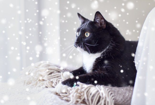 cat lying on blanket at home with snow outsideThe Catnip Times provides safety tips for winter weather