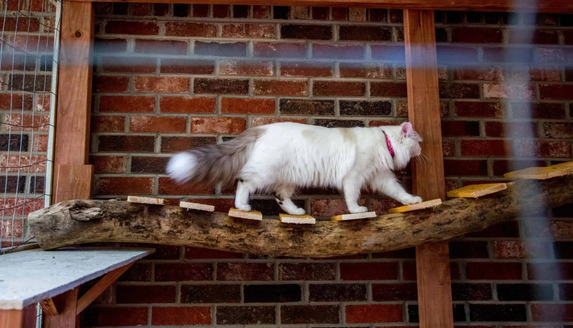 white cat cat enclosure catio