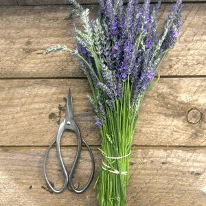 Unique Gardening Gifts