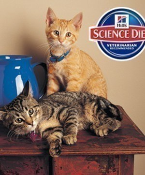 CATurday Treat Day Giveaway | Win 1 of 5,000 Cat Prize Packs from Hills Science Diet