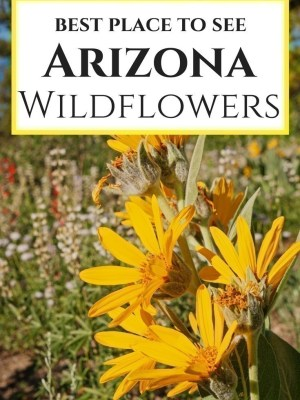 Best Places to See Arizona Desert Wildflowers