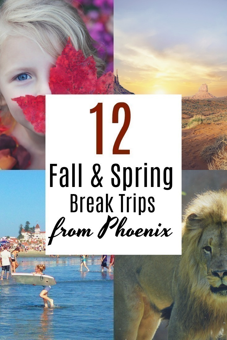 Looking for something to do with the kids during the fall and spring break? Here are 12 fun and family friendly ideas in for those living in the Phoenix area.    #springbreak #fallbreak #Phoenix #Arizona #travel #roadtrip