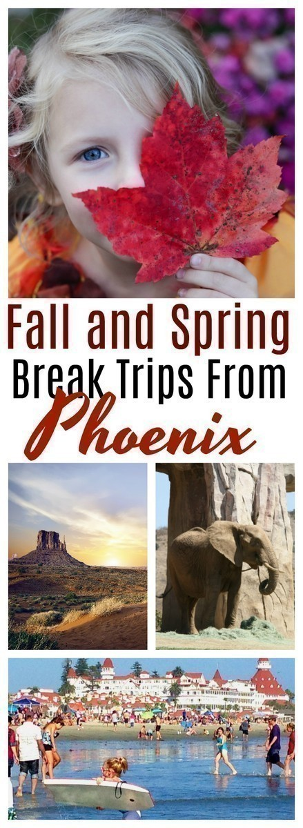 Looking for something to do with the kids during the fall and spring break? Here are 12 fun and family friendly ideas in for those living in the Phoenix area.