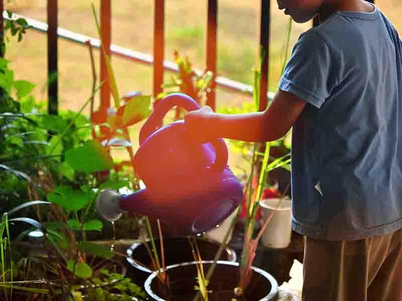 Ensure Sufficient Sunlight For Plants