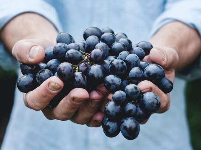 Wine Helps In Reducing The Effects Of PCOS