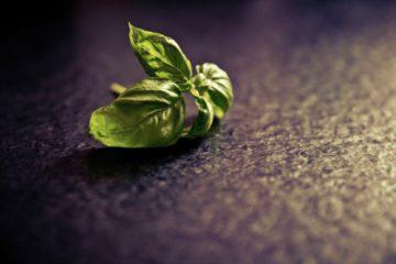 Herb Highlight-Basil