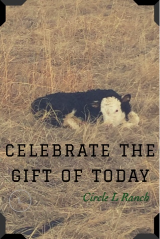 A Sunday Thought~Celebrate The Gift Of Today