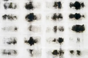 What Is Black Mold Why Is It Toxic