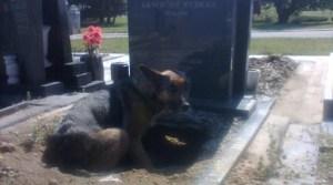 graveyard-dog