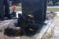 """The Inspiring Story of the """"Graveyard Dog"""""""