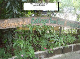 The Enchanting Garden of Sonya's