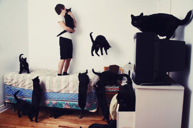 Andreanne-Lupien-cats-photography-1