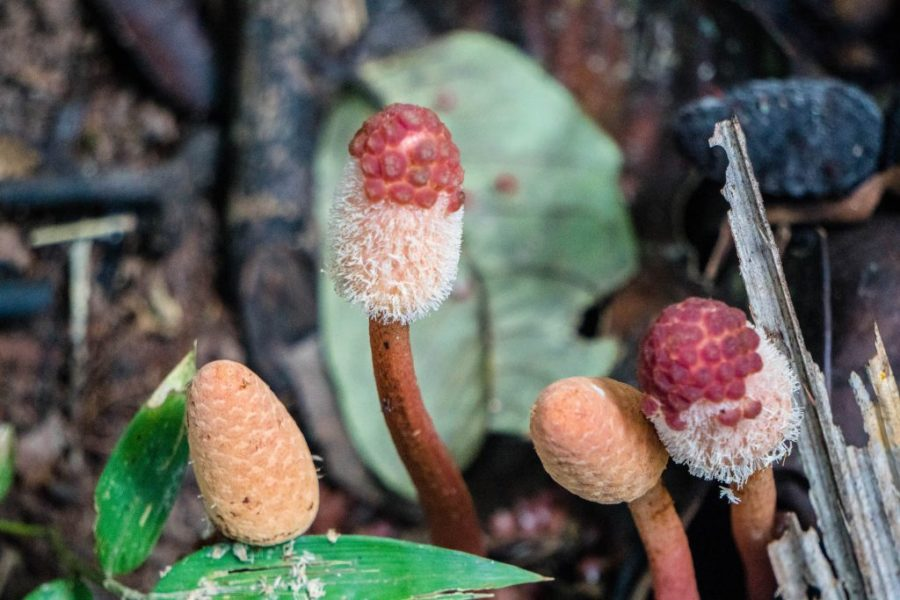 photos of Peru; mushrooms in Iquitos Amazon Jungle