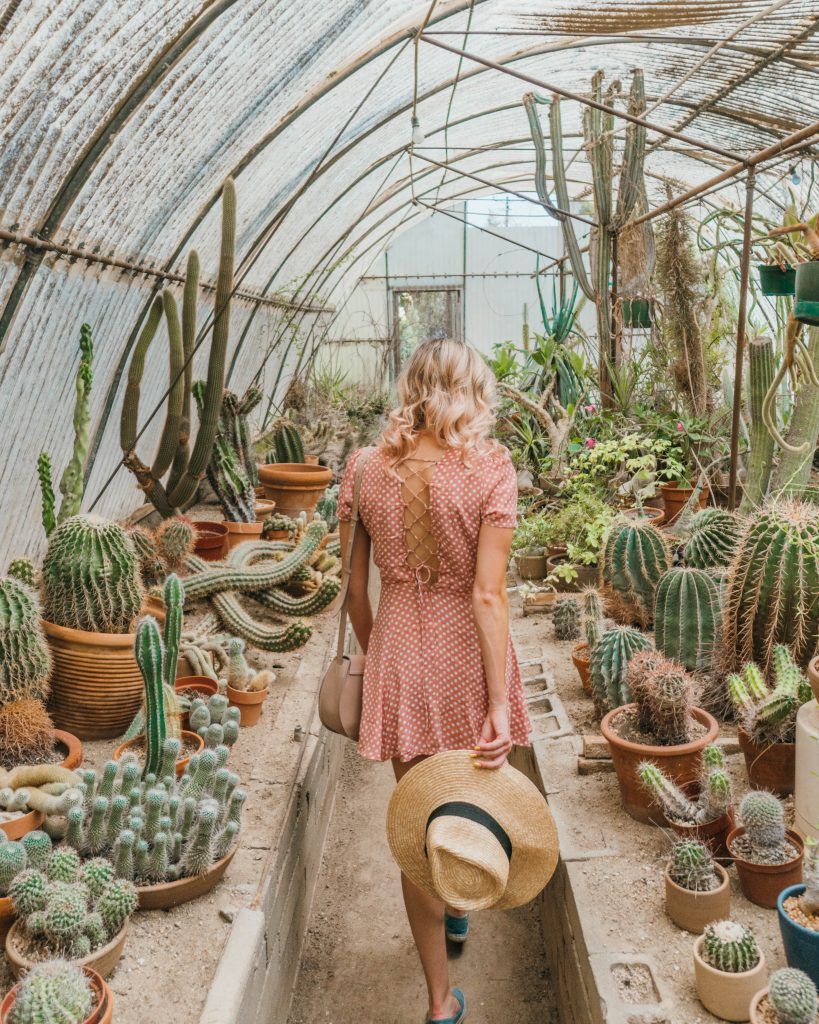 Best Photos in Palm Springs; walking through the Moorten Cactus Botanical Garden