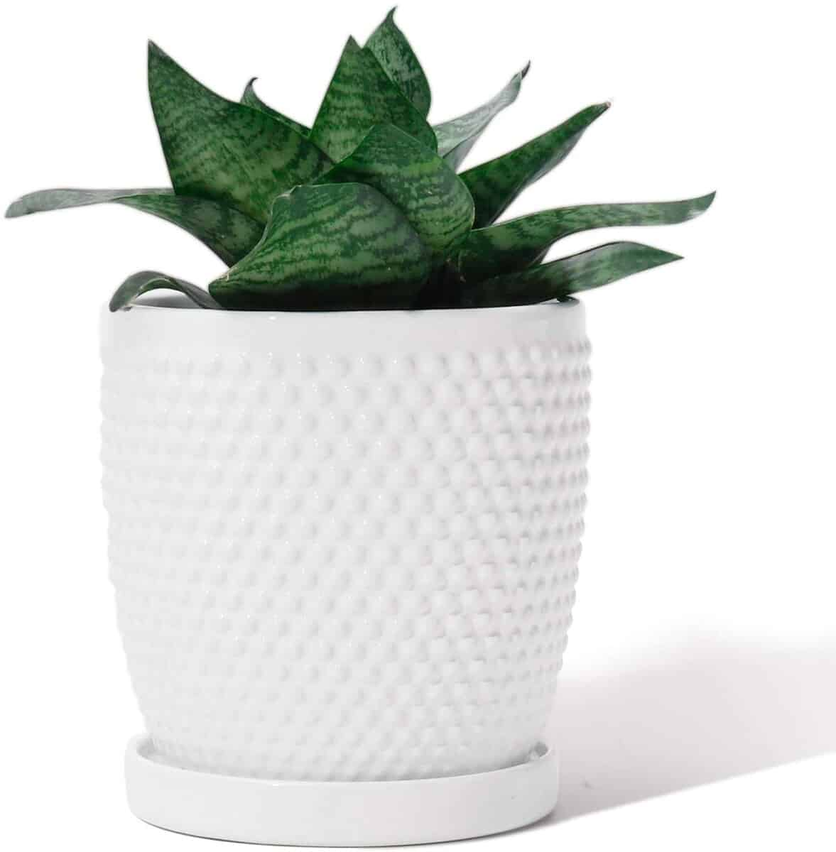 Chic planter from Amazon