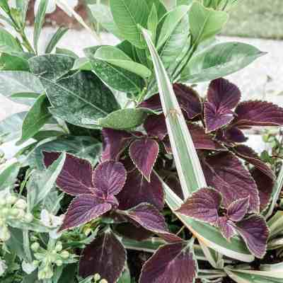 Window Box Plants for your Southern Home