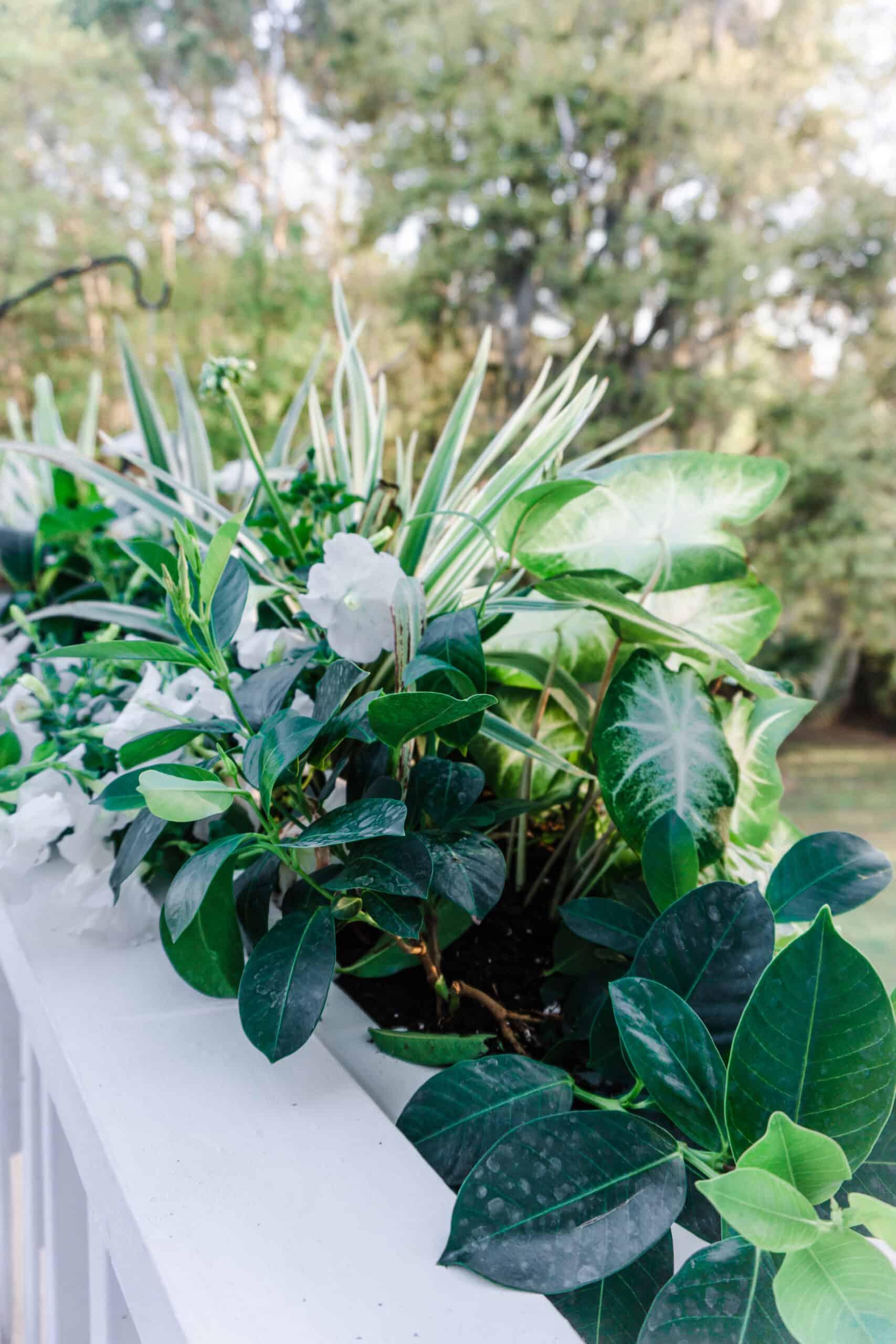 Window box plants.