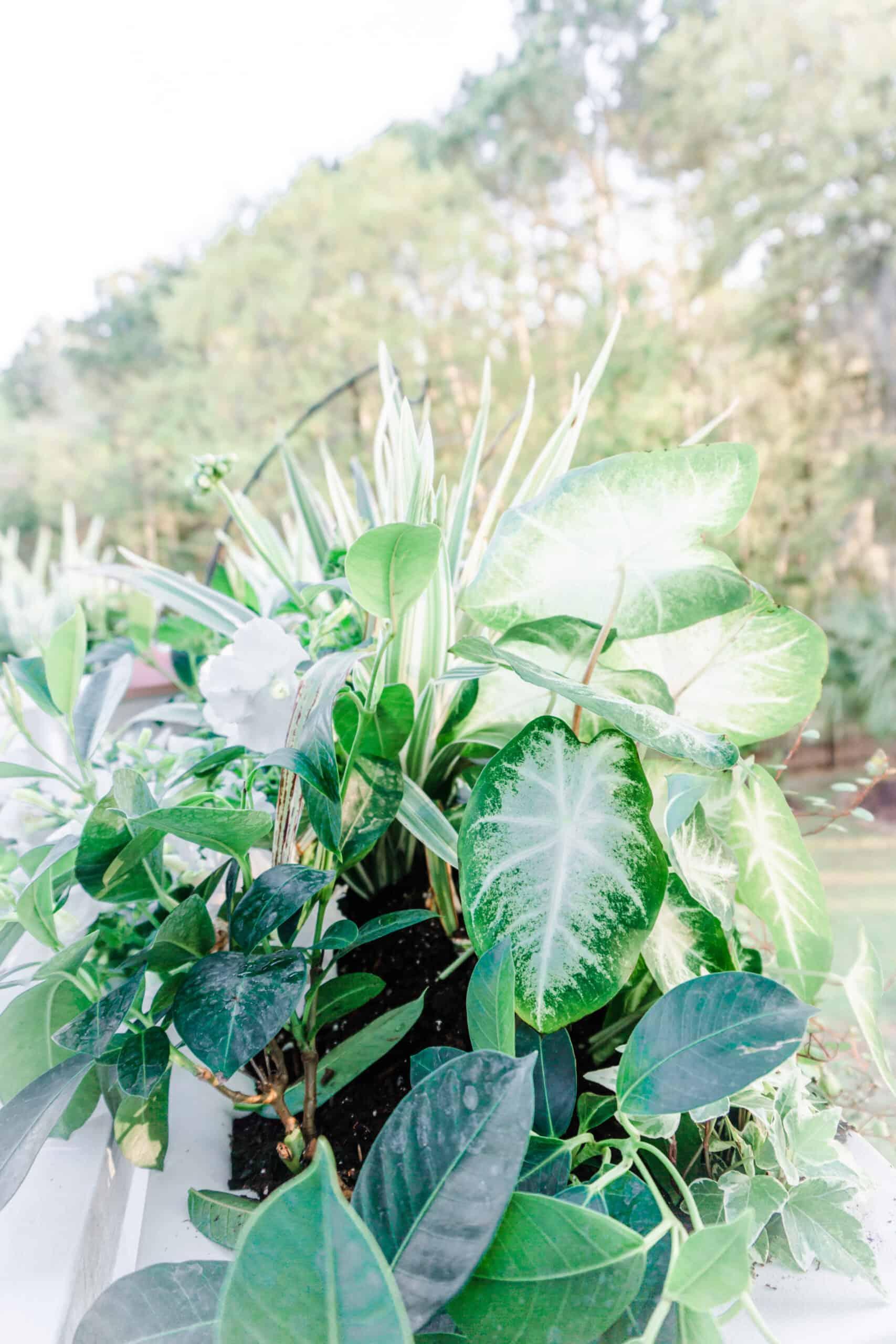 Window box with shade plants.