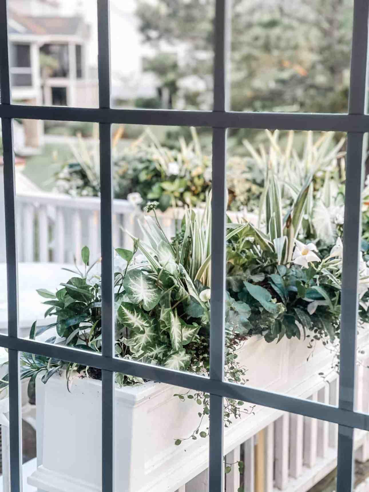 Window box with green shade plants.